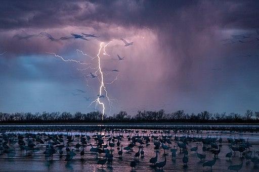 Lightening and birds