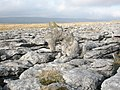 Limestone sculpture on Twistleton Scars - geograph.org.uk - 694877.jpg