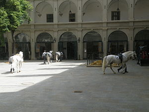 Spanish Riding School - Lipizzaner horses returning to stables after a time of training. The stables are located next to the Spanish Riding School arena in Vienna, Austria, where the Lipizzaner stallions perform.
