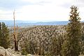 Living and dead bristlecone pine forests - Flickr - daveynin.jpg