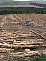 Logging operations to the east of Black Burn Head - geograph.org.uk - 558712.jpg