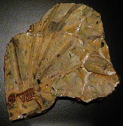 Resultado de imagem para longisquama fossil