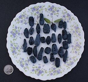 Lonicera caerulea - Haskap berry diversity