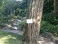 Lorto-botanico-di-padova-2016 28340423396 o 22.jpg