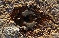 Los Ojos del Salar de Uyuni 03.jpg
