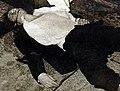 Luigi Tenco morte.jpg