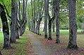 Lustivere mõisa park.JPG