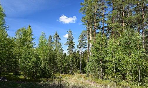 Mýtiny les NH 01.jpg