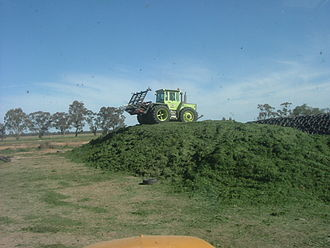 "Silage - MB Trac rolling a silage heap or ""clamp"" in Victoria, Australia"