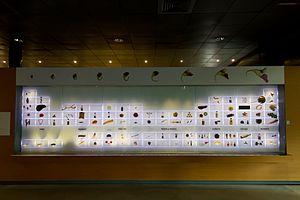 Muséum de Toulouse - Image: MHNT Themes 1