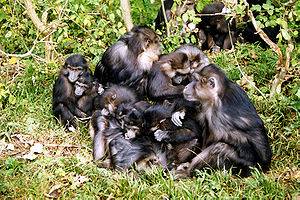 Lore Lindu National Park - The park provides habitat to the Tonkean macaque, endemic to Sulawesi