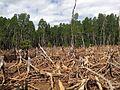 Madagascar Deforestation.jpg