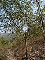 Maggaare (Kannada- ಮಗ್ಗಾರೆ) (2253227214).jpg