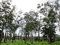 Makor, village situé dans la région de l'Adamawa.jpg