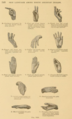 Mallery PISL handshapes m-y.png