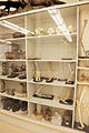 Mammalogy shelves with specimens.jpg