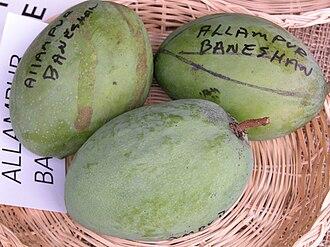 Alampur Baneshan - Unripe Alampur Beneshan mangoes