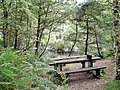 Manley - Delamere Forest - picnic table near the Sandstone Trail - geograph.org.uk - 980134.jpg