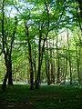 Maplehurst Wood - geograph.org.uk - 423909.jpg