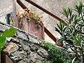 Marciana Alta - Blumentopf mit Katze in der Via Appiani.jpg