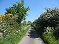 May blossom in the hedgerows - geograph.org.uk - 1337907.jpg