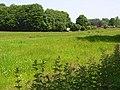 Meadow, Broadmayne - geograph.org.uk - 847806.jpg