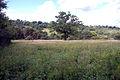 Meadow (2682677333).jpg