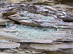 Melanterite2 - Copperas Mountain, Paxton Township, Ross Co, Ohio, USA.jpg