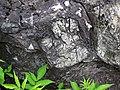 Metamorphosed pillow basalt (Ely Greenstone, Neoarchean, ~2.722 Ga; large glacial erratic along Main Street, Ely, Minnesota, USA) 17 (21267380449).jpg