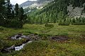 Moor Kaponigtal im Nationalpark Hohe Tauern, Kärnten.jpg