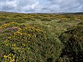 Moorland, Dockwell Ridge - geograph.org.uk - 1469983.jpg