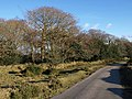 Moorland edge, Ensworthy - geograph.org.uk - 1758250.jpg