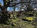 Moorland edge near Leighon - geograph.org.uk - 1232601.jpg