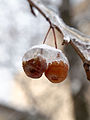 Moscow, ice apples 02.jpg