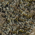 Moss and lichen tileable.jpg