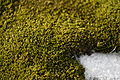 Moss on Aitcho Island.jpg