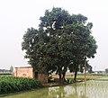 Motor, Rolu Majra, Rupnagar, Punjab, 140102, India - panoramio.jpg