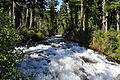 Mount Rainier - Narada Falls looking down from bridge 01.jpg