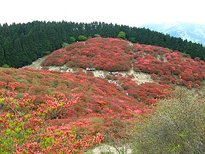 Mount Yamato Katsuragi - Image: Mount Yamatokatsuragi tsutsujien 1