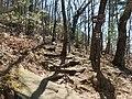 Mount Yonah Trail - panoramio (8).jpg