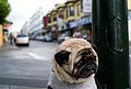 Mr Newman - the world's saddest dog.jpg