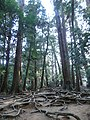 Mt.Kurama01.jpg