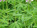 Munnar garden.jpg