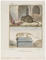 Mus musculus - met skelet - 1700-1880 - Print - Iconographia Zoologica - Special Collections University of Amsterdam - UBA01 IZ20500061.tif