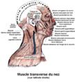 Muscle transverse du nez.png
