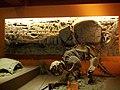 Museo de ciencias naturales - panoramio (3).jpg