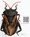 Museum specimen with QR Code containing label data - ZooKeys-209-147-g006.jpeg