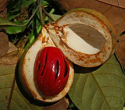 Image of ripe nutmeg fruit split open to show red aril