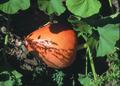NRCSOR00049 - Oregon (5793)(NRCS Photo Gallery).tif