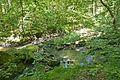 Naturdenkmal Nürtingen-Aich mit Insel 81160493239.jpg